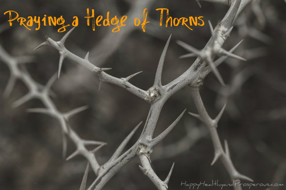 Praying a Hedge of Thorns