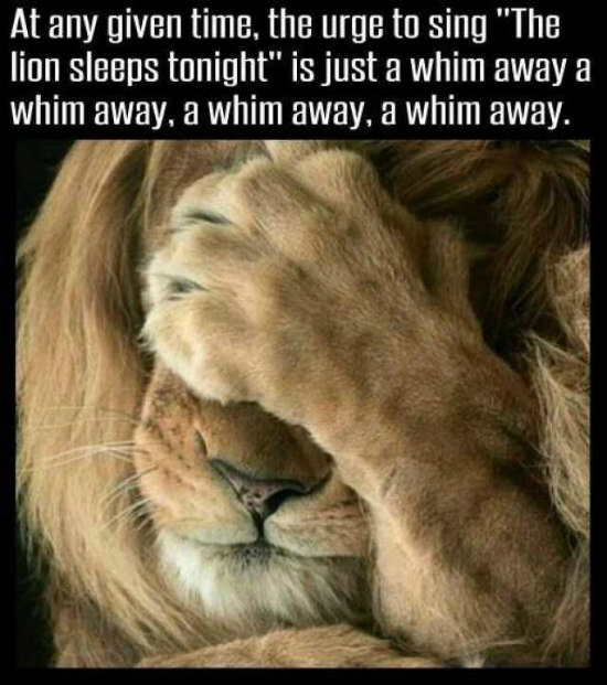 Funny Friday The Lion Sleeps Tonight Happy Healthy Prosperous