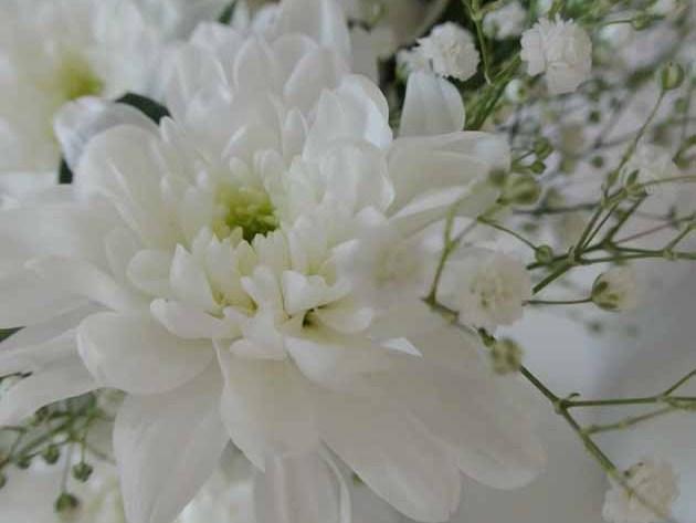 Chrysanthemen im Novemerb