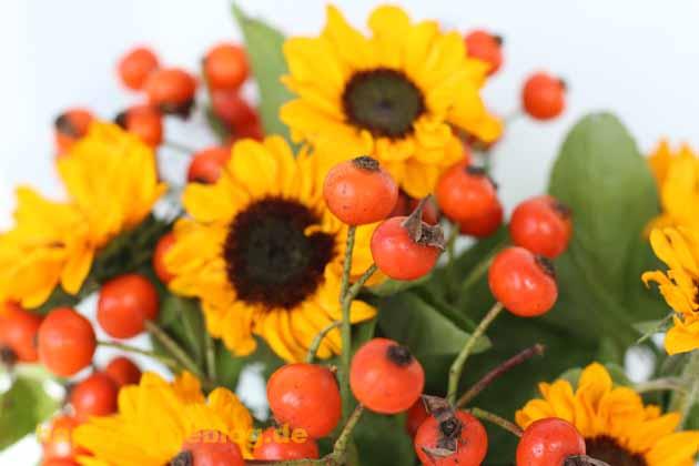 Sonnenblume und Hagebutten für Inga