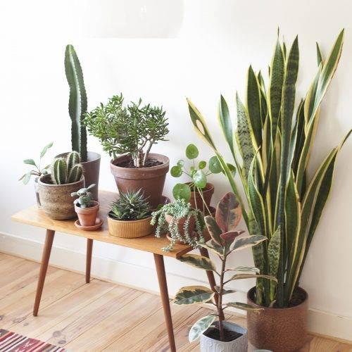Workshop Planten in leven houden wildernis HappyMakersBlog
