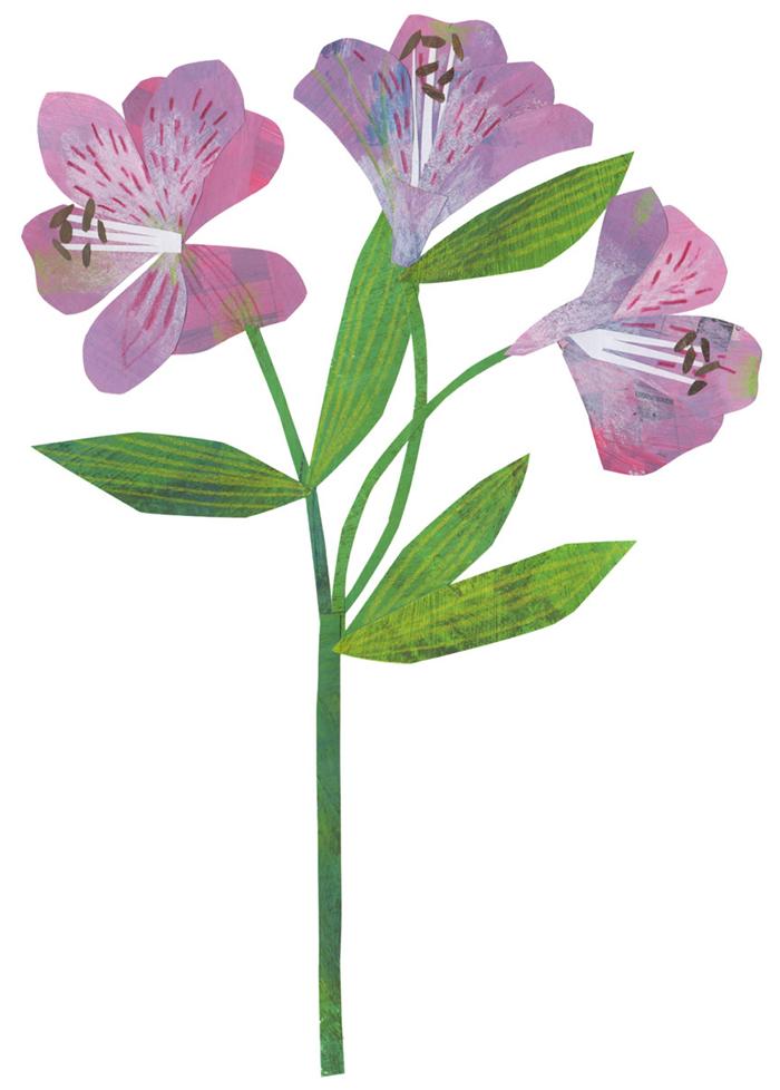 Alstroemeria Clover Robin 2 HappyMakersBlog Vriendschapsbloemen