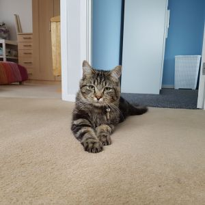 Cat Sitting Newcastle upon Tyne