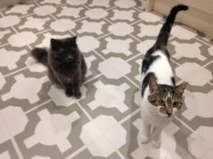 Cat Sitter Newcastle