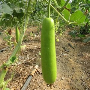 Summer vegetable seeds