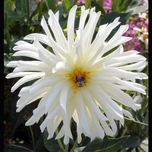 Winter flower seeds