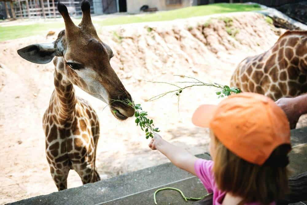 Consider giving zoo memberships as a minimalist gift idea for kids.
