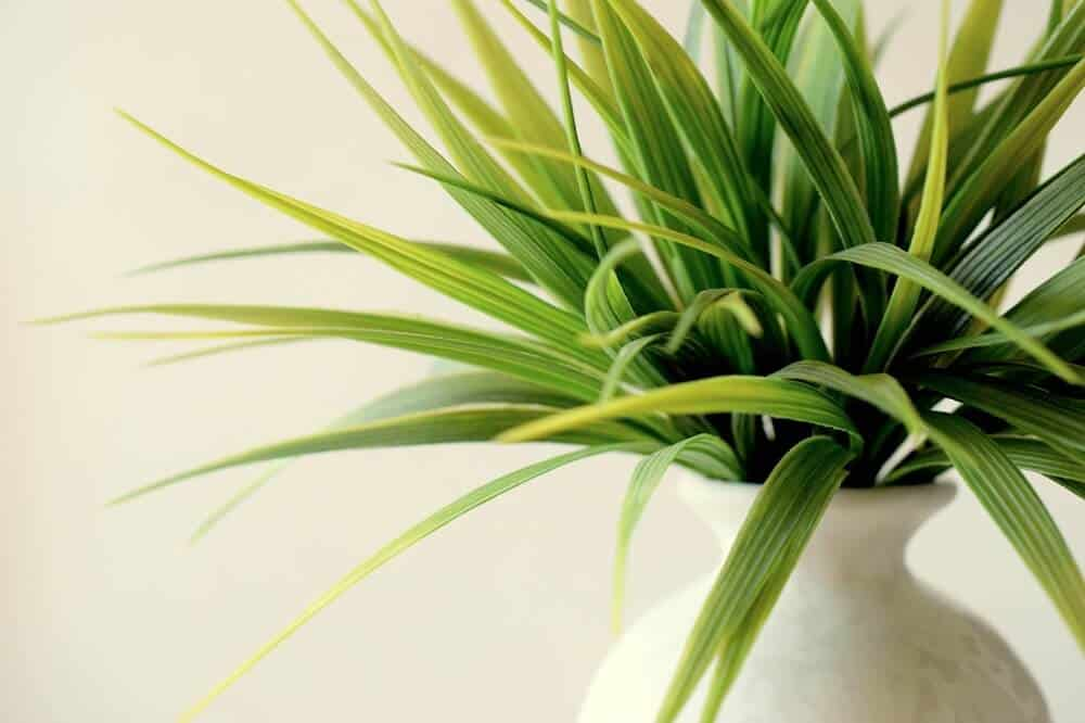 Plants look great in a minimalist bedroom.