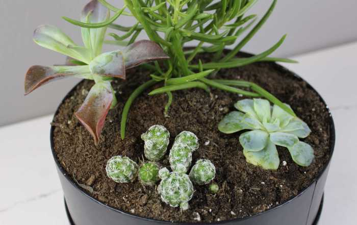 How to make your own DIY succulent plus tips for caring for your indoor succulents.