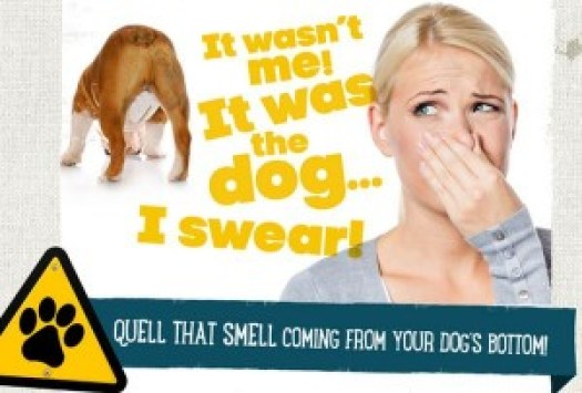 Gassy Dog? Learn how to quell that smell! – Itchy Dog Solutions