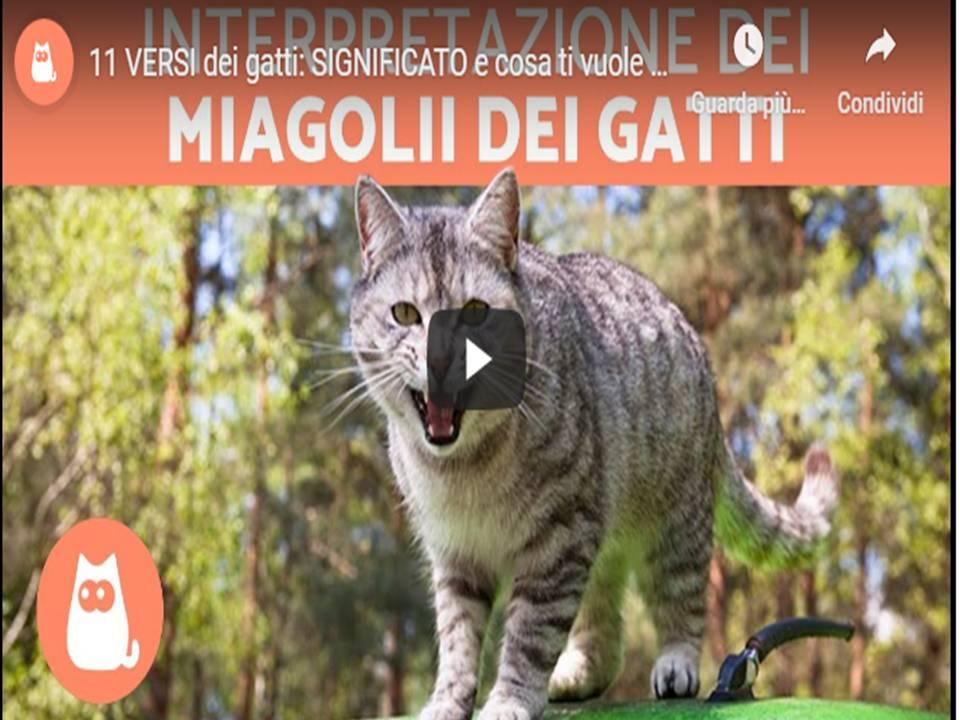 Gatti – 11 Versi strani, SIGNIFICATO e cosa ti vogliono dire!