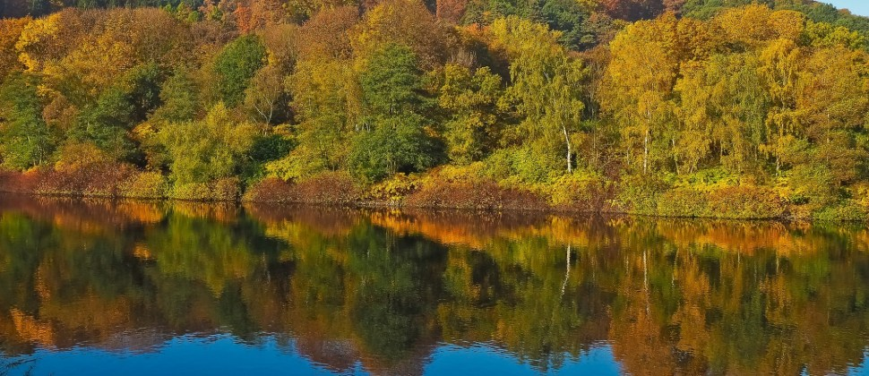 Pristine and calm lake surrounded by a lush forest in bright fall colors