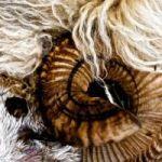 Ziz - Spirals