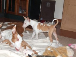 Bunny with pups (Zipper front, Catdog standing)