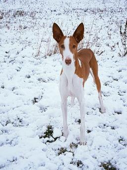 james_snow