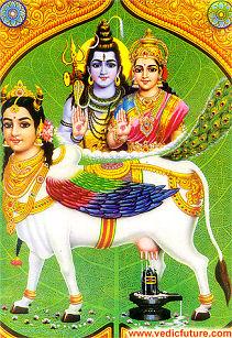 Kamadhenu - divine goddess