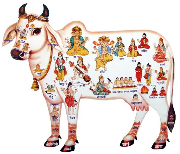Kamadhenu - the sacred cow