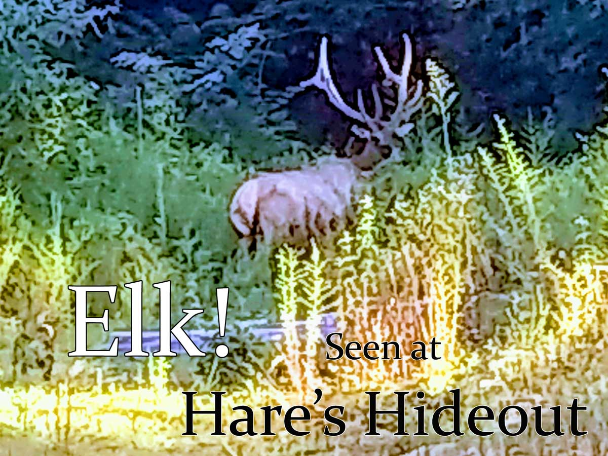 Elk, right here at Hare's Hideout. He likes to hang out with the horse.
