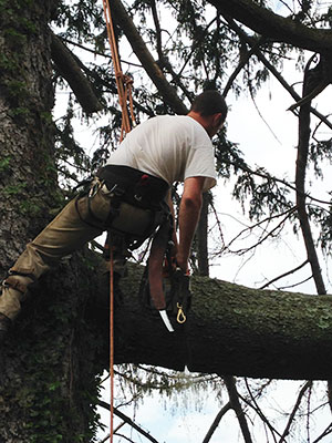 Harford Tree Expert Removing Tree from Residential Property