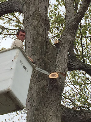 Tree Removal on Commercial Property by a Harford Tree Expert