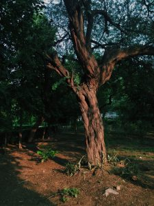 Older Trees