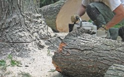 Questions to Ask Yourself Regarding Commercial Tree Removal Services