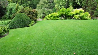 Residential Landscaping Ideas to Implement within Your Property