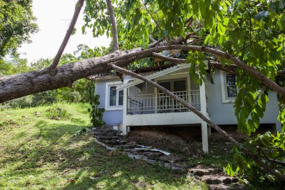 How to Prepare your Trees for a Potential Hurricane