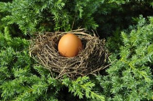 What You Should do When Birds Nest in Your Trees