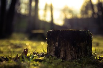 How to Deal with an Annoying Tree Stump
