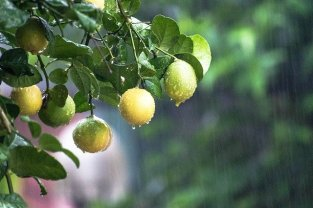 How Does Rain Affect Your Trees?