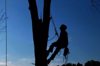 Prevalent Tree Pruning Mistakes to Avoid
