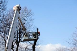 When Do I Need a Tree Crane?