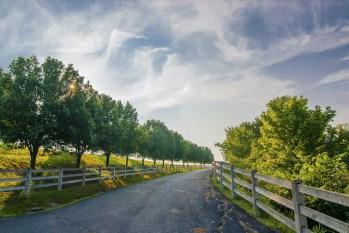 Prevalent Tree Myths Debunked