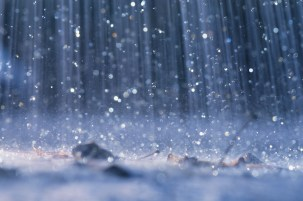 Is It Possible for Rain to Hurt Your Trees?
