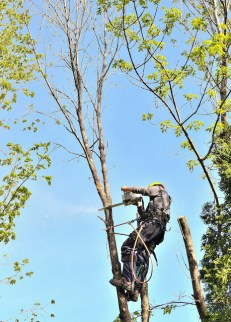 Key Differences With an Arborist and a Tree Surgeon