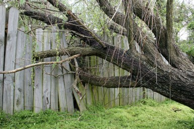 Invasive Tree Species to Keep an Eye Out for in Maryland