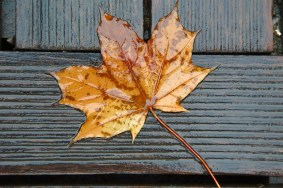 When to Be Worried About Brown Leaves on Your Trees