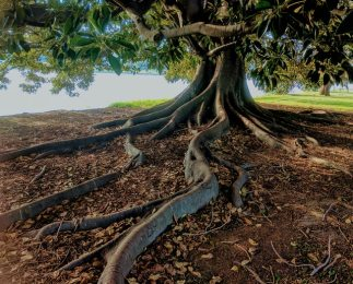 3 Prevalent Questions About Tree Roots