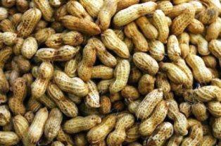 Harga Kacang Tanah Basah