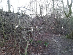 tree and wall damage after high winds