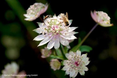 Makroaufnahme der Artenvielfalt in der Blumenwiese