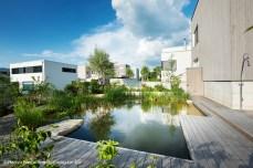 schöne Spiegelung auf Wasseroberfläche von Familienschwimmteich im Garten in familiärem Wohnquartier in Olten