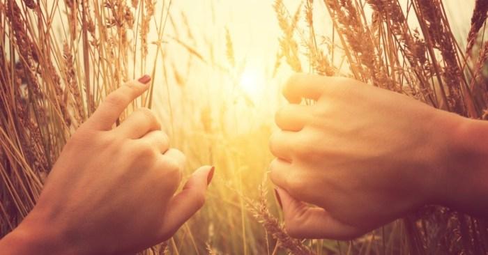 32738-wheatfield-sun-joy-1200w-tn