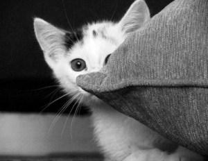 cat hiding social media reviews