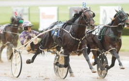 Fear The Dragon (David Miller) was the other Tattersalls winner   Dave Landry
