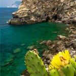 Corniglia Beach Cactus