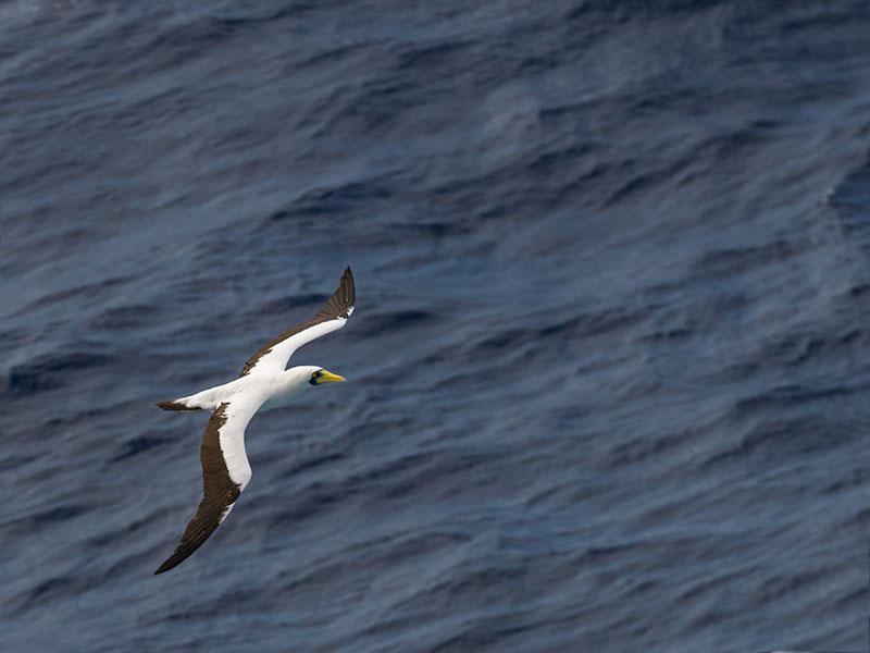 Albatros at Sea (where else??)