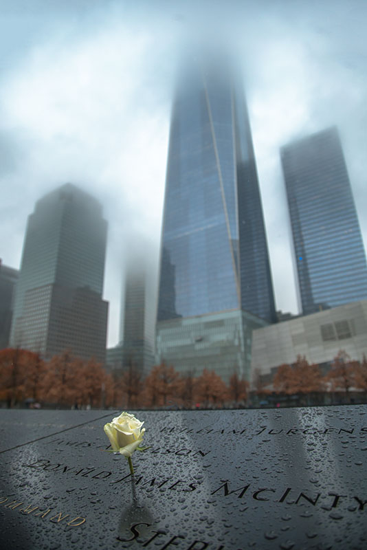 Memorial Rose and the Freedom Tower
