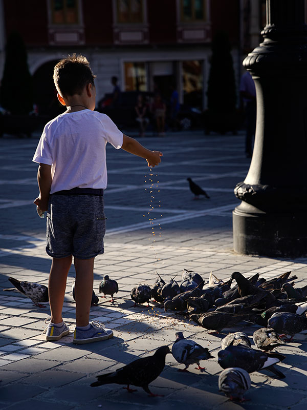 Brosov Feeding the Pigeons